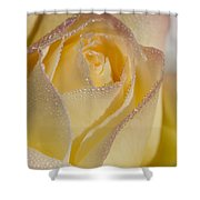 Dew Bejeweled Peace Rose Shower Curtain