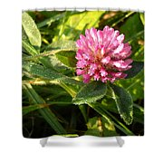 Dew Covered Clover Blossom Shower Curtain