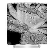 Dew Drop Rose Shower Curtain