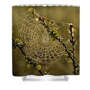 Dew Highlights An Orb-weaver Spiders Shower Curtain