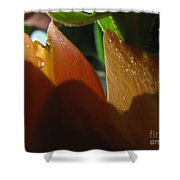 Dew Light And Shadows Shower Curtain
