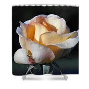 Dew On Rose Shower Curtain