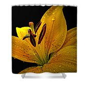 Dew On The Daylily Shower Curtain