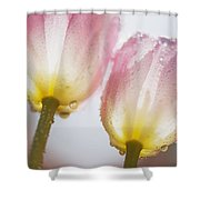 Dew On Tulips Shower Curtain