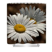 Dew Tell Oxeye Daisy Wildflowers Shower Curtain