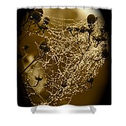 Dewdrop Cameo Shower Curtain by Carol Groenen