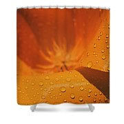 Dewdrops On A Flower Shower Curtain