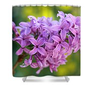 Dewdrops On Lilacs Shower Curtain