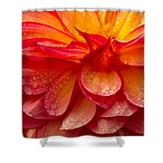 Dewey Dahlia Closeup Shower Curtain