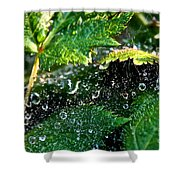 Dewey Web Shower Curtain