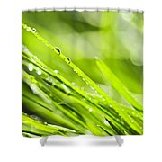 Dewy Green Grass  Shower Curtain