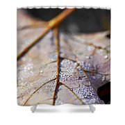 Dewy Leaf Shower Curtain by Elena Elisseeva