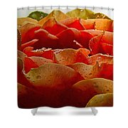 Dewy Morn Shower Curtain