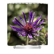 Dewy Purple Fleabane Shower Curtain