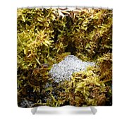 Diamonds In A Dragon Nest Shower Curtain