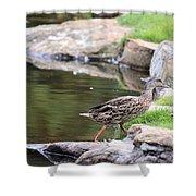 Diary Of A Mad Brown Duck Shower Curtain