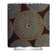 Diatom - Arachnoidiscus Shower Curtain