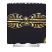 Diatom - Diploneis Crabro Shower Curtain by Eric V. Grave