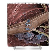 Diatom With Thermophilic Bacteria Shower Curtain