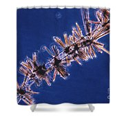 Diatoms Attached To Alga, Lm Shower Curtain