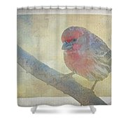 Digitally Painted Finch With Texture II Shower Curtain