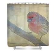 Digitally Painted Finch With Texture IIi Shower Curtain