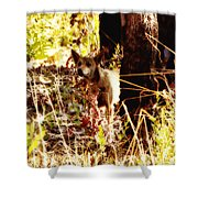 Dingo In The Wild V2 Shower Curtain