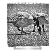 Dining On Daisies Shower Curtain