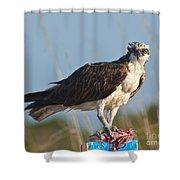 Dining Osprey Shower Curtain