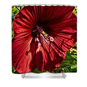 Dinner Plate Hibiscus Shower Curtain