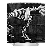 Diprotodon, Cenozoic Mammal Shower Curtain