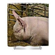 Dirty Piggy Shower Curtain