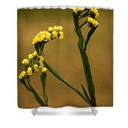 Distinctive Look Shower Curtain