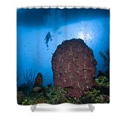 Diver And Barrel Sponge, Belize Shower Curtain
