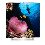Diver And Magnificent Anemone, Fiji Shower Curtain