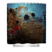 Diver And Sea Fan At Liberty Wreck Shower Curtain