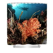 Diver Explores A Coral Reef Shower Curtain