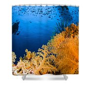 Diver Hovering Over Soft Coral Reef Shower Curtain