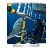 Diver Observes A Male Great White Shark Shower Curtain