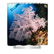 Diver Over Soft Coral Seascape Shower Curtain
