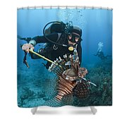Diver Spears An Invasive Indo-pacific Shower Curtain