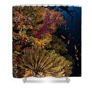 Diver Swims By Soft Corals And Crinoid Shower Curtain