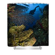 Diver Swims Over A Reef, Belize Shower Curtain