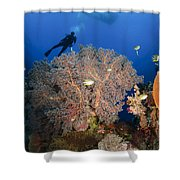 Diver Swims Over Sea Fans, Indonesia Shower Curtain
