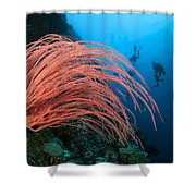 Divers And Whip Coral Shower Curtain