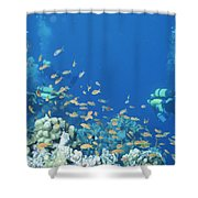 Divers Enjoy The Beauty Of The Reefs Shower Curtain