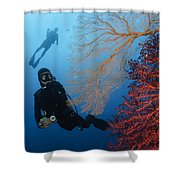 Divers Swimming By Sea Fans, Indonesia Shower Curtain