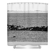 Diving Coney Island In Black And White Shower Curtain