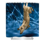 Diving Dog 2 Shower Curtain