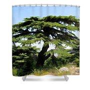 Do-00511 Cedar Forest Shower Curtain